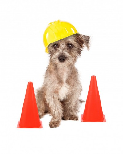 A dog sitting in front of construction cones wearing a yellow hard hat