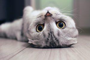 cat-hairball-info
