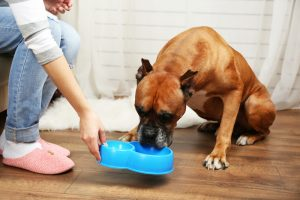nutrition-for-pets