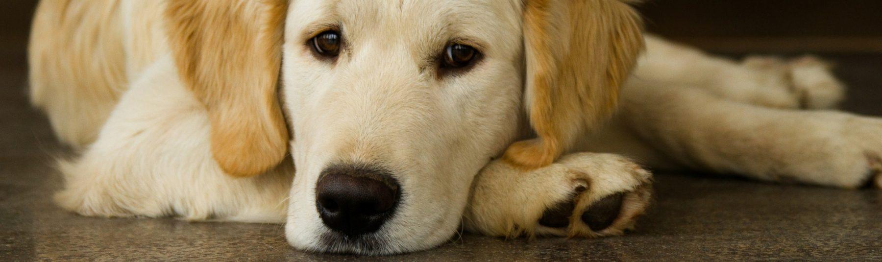 dog-heartworm-treatment
