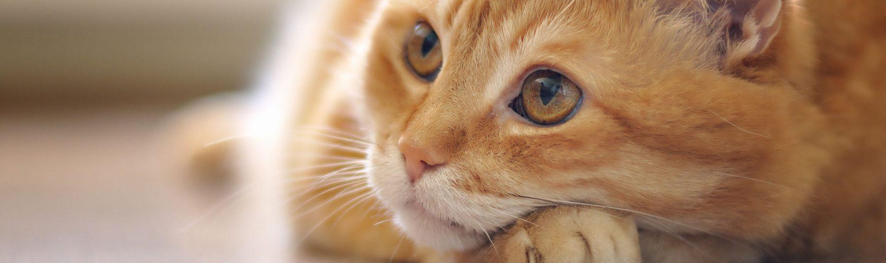 cat-services-cumberland