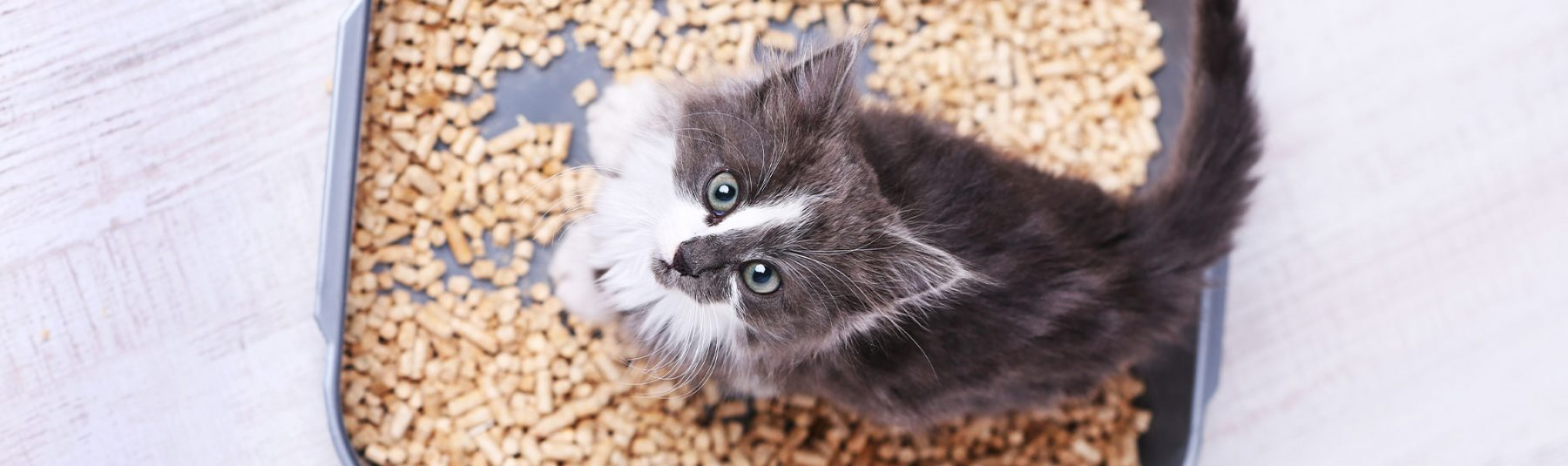 upset stomach cats treatment