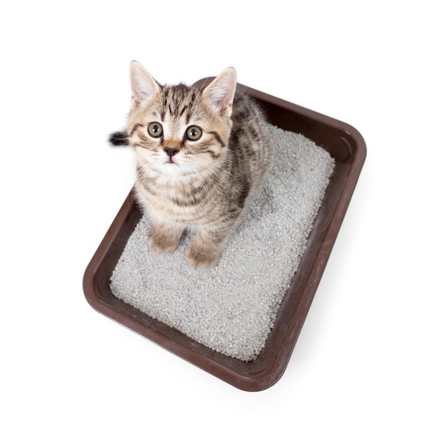 cat-blockage-blog