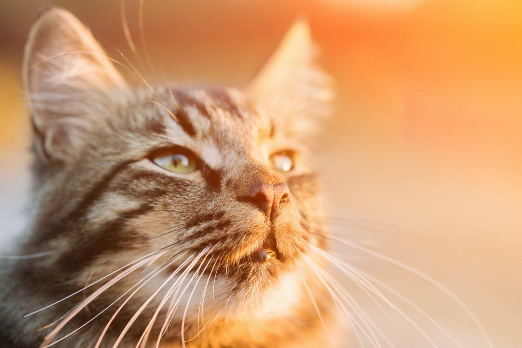 cat-tips