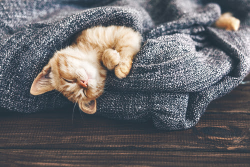 cat laying in blankets