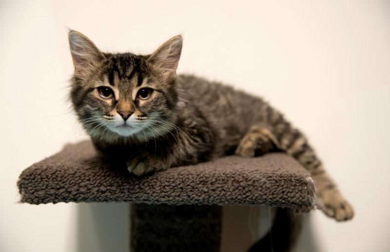 Kitten Behaviour Tips Cumberland Veterinary Clinic