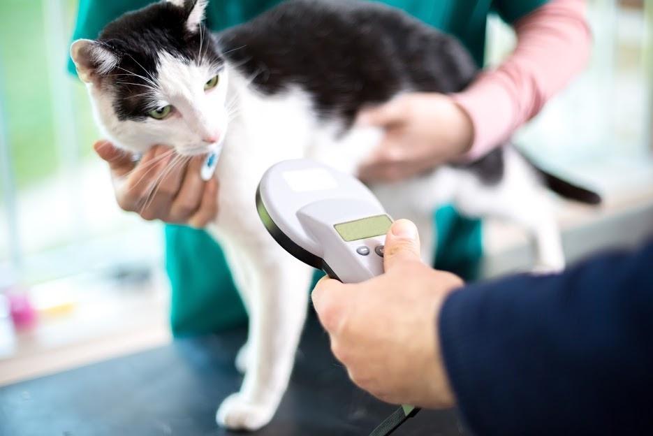 cat getting microshipped