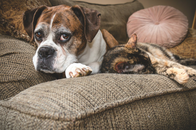 senior dog and cat sleeping