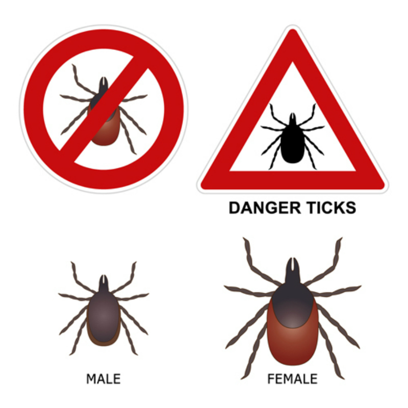 What You Know About Ticks in Saskatoon