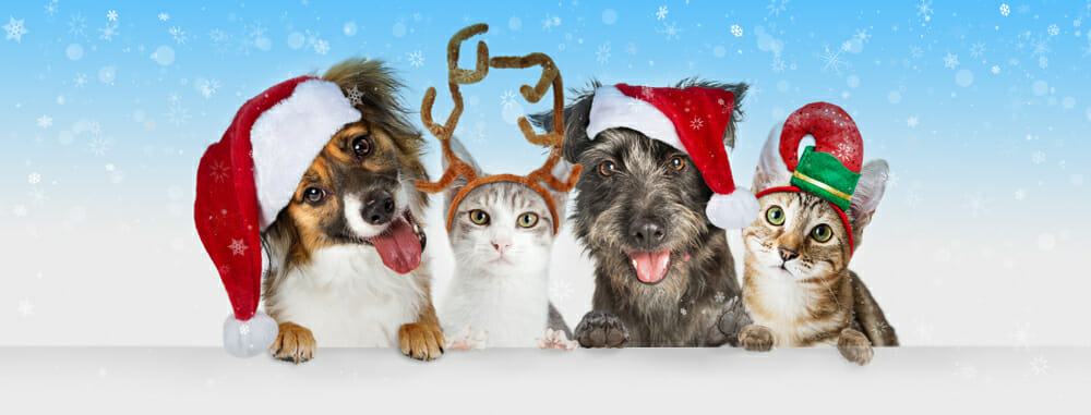 Dogs and cats wearing Christmas hats